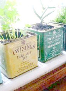 latas para plantar